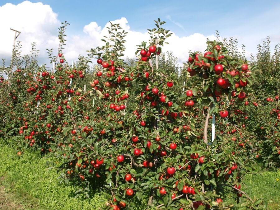 Nemusíme mít vlastní zahradu, abychom jedli poctivé ovoce