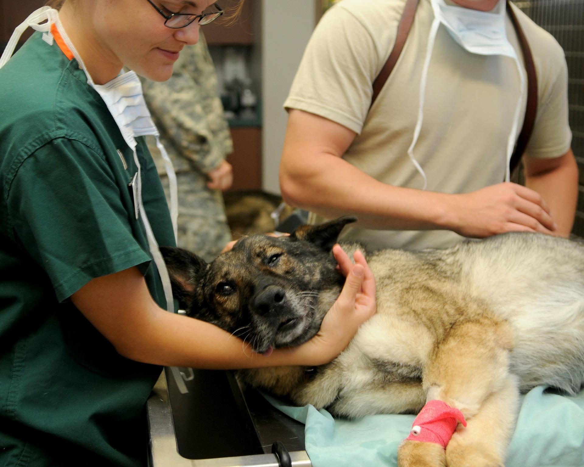 """I zvířátka potřebují svého """"obvodního"""" lékaře"""