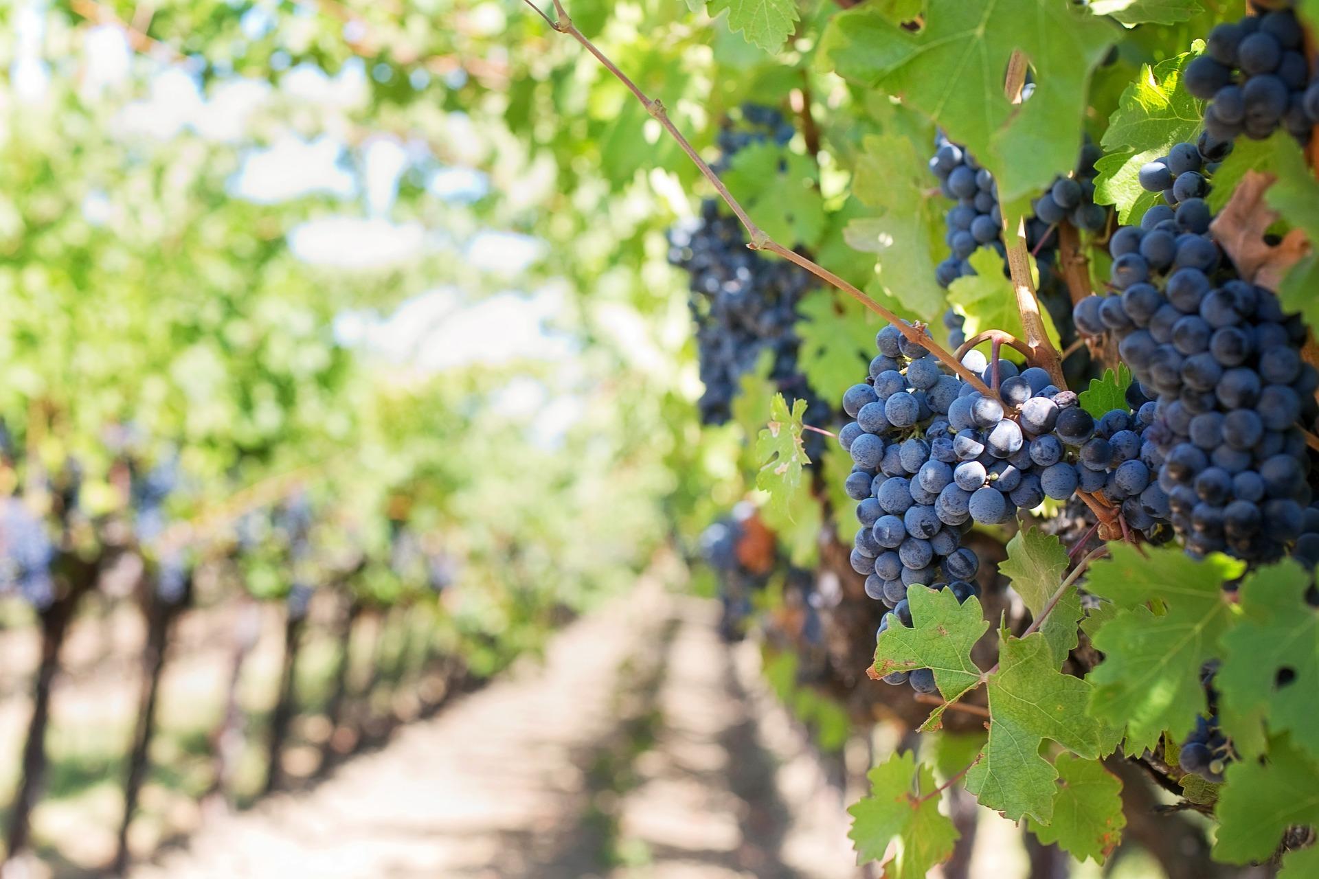 Naučte se rozumět italským vínům