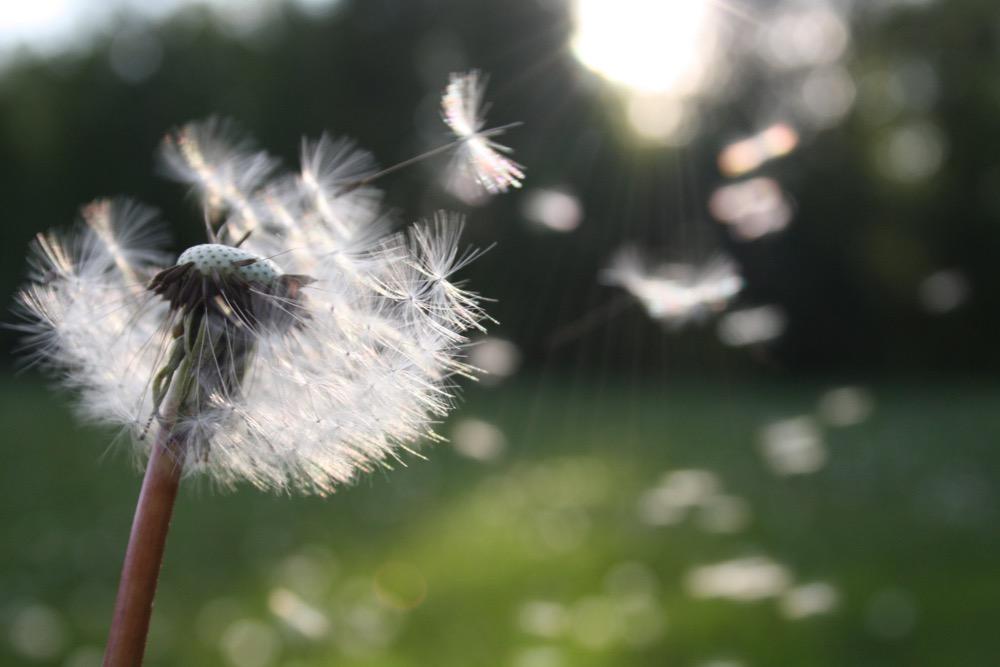 Podzim je ideální čas na návštěvu alergologa