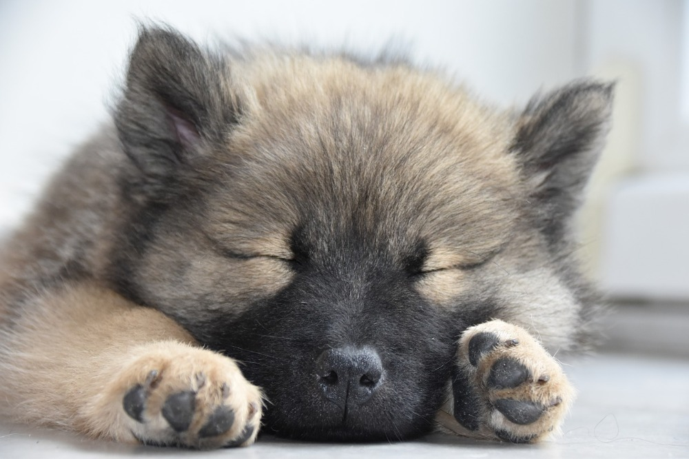 I psi mohou chodit na terapii